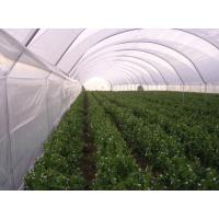 Найлон за оранжерии - бял - различни размери - дебелина 120 микрона
